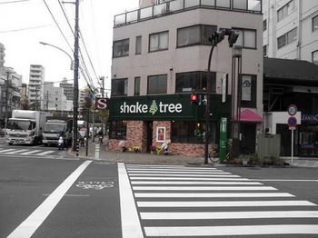 shake tree.jpg